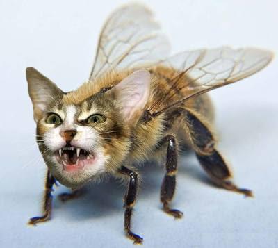 Postajte bilo koju sliku - Page 12 Bee-cat