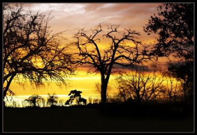Tree Brushes 1 for Photoshop فرش على شكل اشجار Tree%2BBrushes%2B1%2Bfor%2BPhotoshop