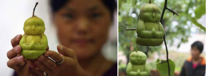 Какой из Вас получился бы фрукт (тест) - Страница 3 Buddha-pears