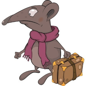Who Believes This?  Not Me! Rat-suitcase