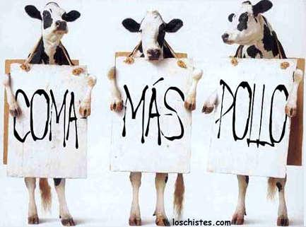 Humor gráfico Vacas