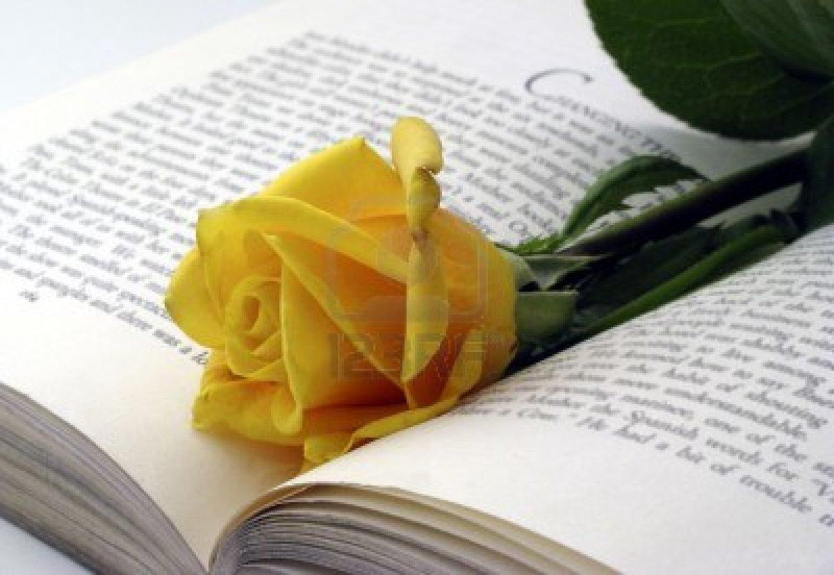 Bienvenidos al nuevo foro de apoyo a Noe #247 / 21.04.15 ~ 23.04.15 - Página 39 3699806-rosa-amarilla-colocado-en-el-libro