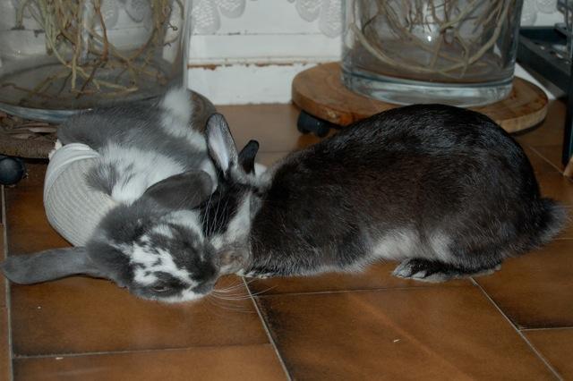 Rabbit story : histoire d'un coup de foudre DSC_2964