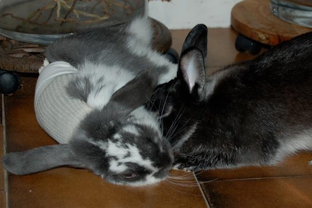 Rabbit story : histoire d'un coup de foudre DSC_2965