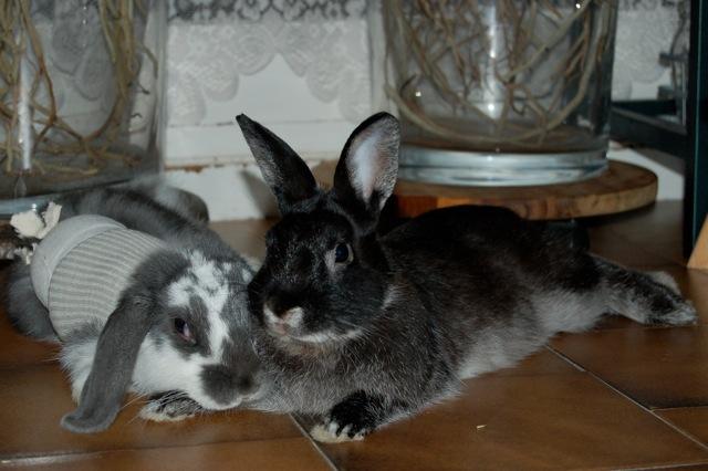 Rabbit story : histoire d'un coup de foudre DSC_2968