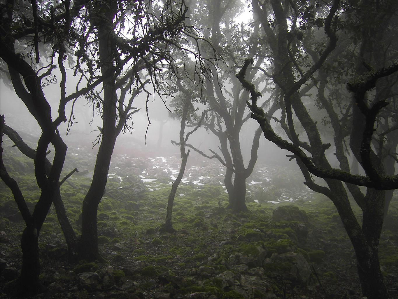 Bosque cercano a las villas  Pict6038