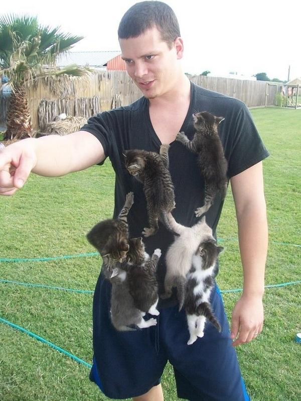 Сама по себе гулёна (о кошках) 1369333235_0