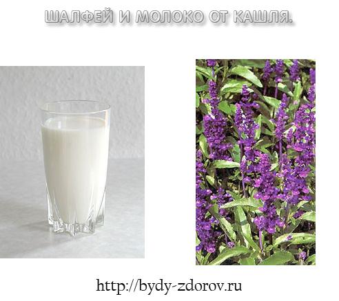 Красота и здоровье Shalfey-moloko-ot-kashlya