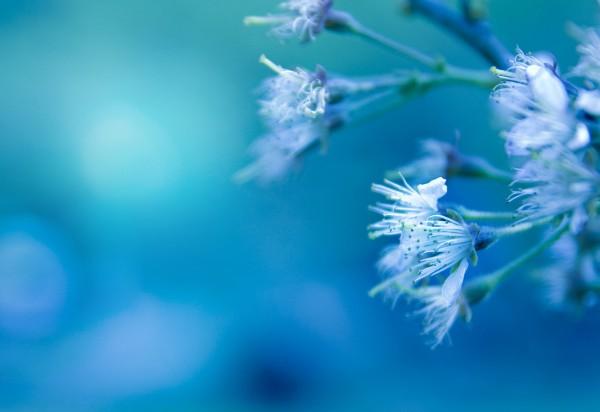 Цвета, их характеристики и энергетические вибрации Oboitut.com_1405953259
