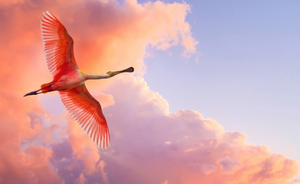 Поэзия мудрости и позитива ;) Kartinki24_bird_0009_2