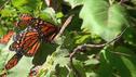 Полет бабочки 3