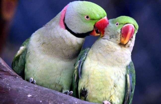 Científicos reconocen la existencia de conciencia en los animales Detalleeef2012cbeaeeefcdf5812ec689c05d1