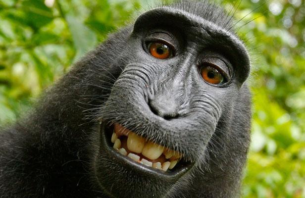 Attention arnaques ! le boncoin-coin, Sfr et les autres Article_singe-photographe