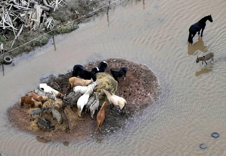 Belle image de fraternité animale dans l'adversité! France-weather-floods-diaporama