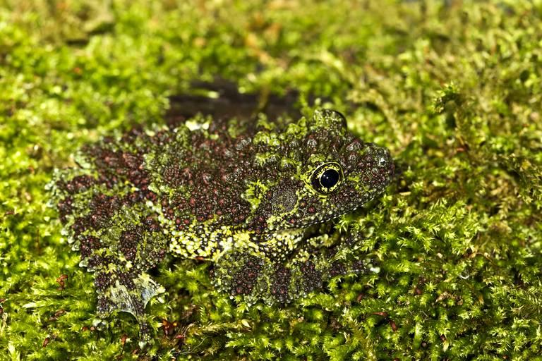 Si t'es invisible poste sur ce fil Features-camouflage-animals_9-diaporama