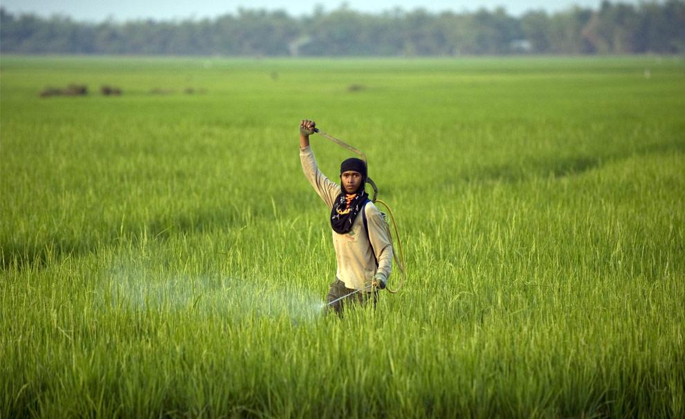 Cambodge... C24_17921599