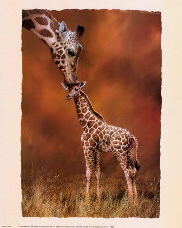 Fiaba Africana: La Giraffa Vanitosa Mendez-simon-bacio-di-giraffa
