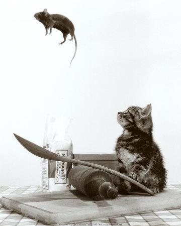 Ako sa dnes máš? 3 - Stránka 2 Cat-and-mouse