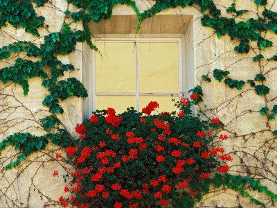 Prozori koji govore - Page 2 Jones-adam-vine-and-flowers-around-window-brixen-italy