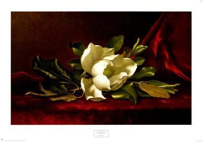 Historias de millonarios por accidente Heade-martin-johnson-flor-de-la-magnolia