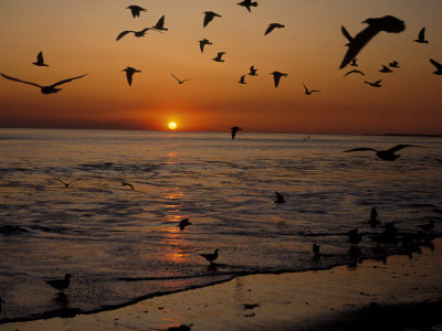 the last person to post here wins Birds-flying-at-sunset