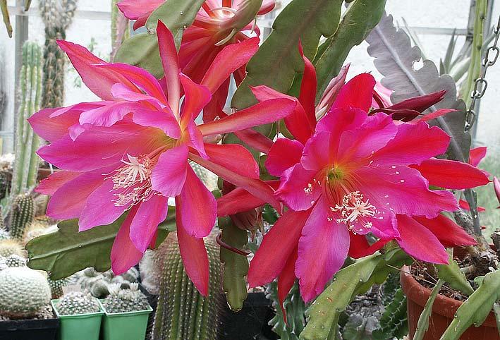 Les cactus ont le moral... EpiXPegasusSpaceRocket