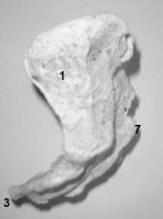 ostéologie: CRÂNE,vertèbres,sternum,coccyx,cotes Psacrum3