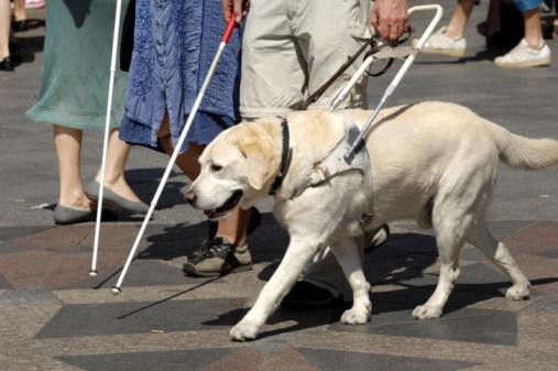 Mieux vaut être pauvre mais maìtre chez soi Guide-dog13