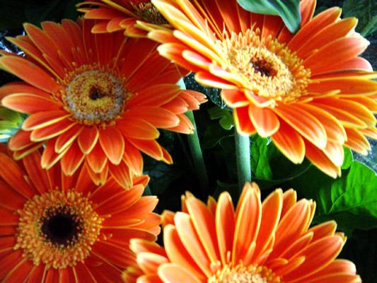 BUSQUEMOS HERMOSAS FLORES - Página 4 Flores