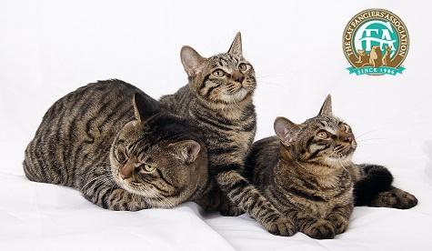 """Конкурс """"Кошка"""" - Страница 2 Clh1"""