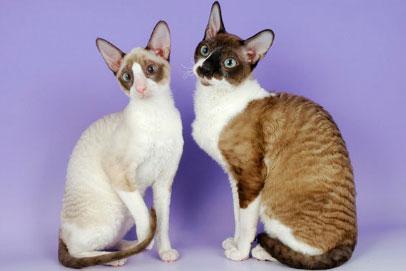 Необычные и редкие породы кошек и собак Main