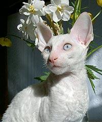Необычные и редкие породы кошек и собак Main2