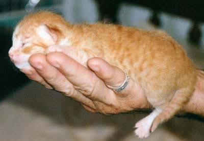 Необычные и редкие породы кошек и собак 05