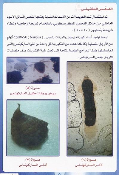 أمراض الاسماك – مرض حقيبة الحبر السوداء 4b1d1_D8B5D98AD8AF_mk13567_marad5