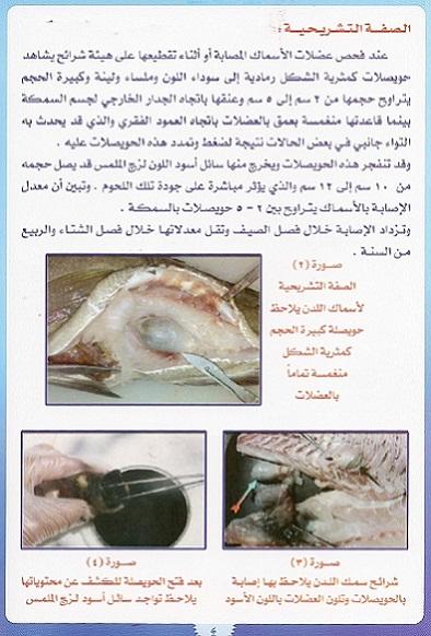 أمراض الاسماك – مرض حقيبة الحبر السوداء 9bcff_D8B5D98AD8AF_mk13567_marad4