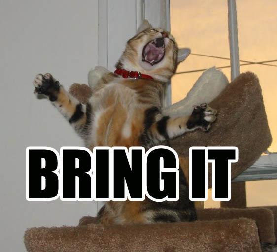 Round 1 (summer)  -CHALLENGES- Bring_it_cat