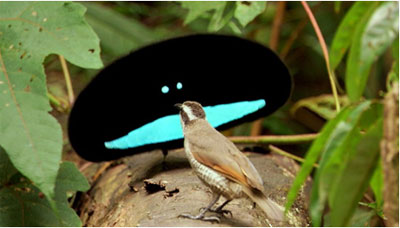 Slike koje izgledaju fotoshopirane- A NISU! Bird