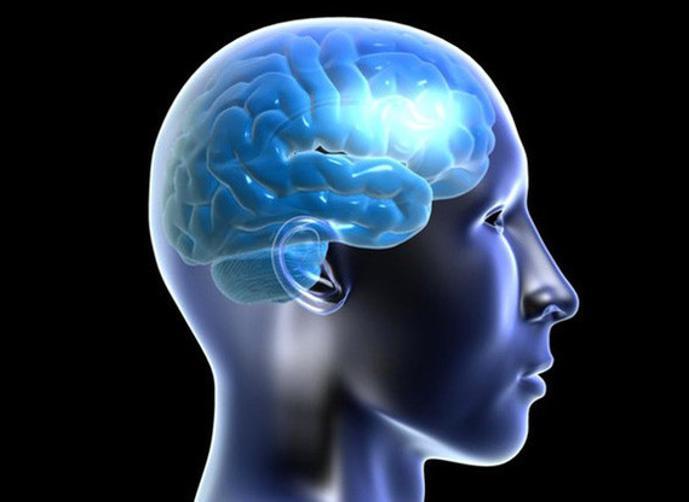 إكتشاف دماغ ثالث في جسم الإنسان خارج الجمجمة  Gallery-preview