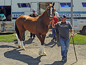 Triple Couronne 2014 - Page 3 CaliforniaChrome50BelmontArrivalRS298