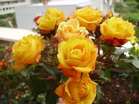 Cveće slike - Page 3 1337714882m263