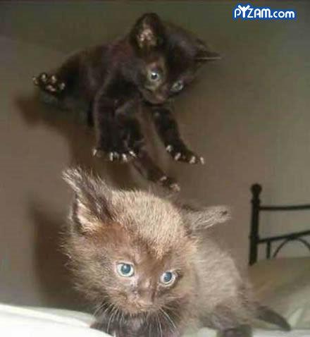 Lidojošie kaķi - Page 3 81548924