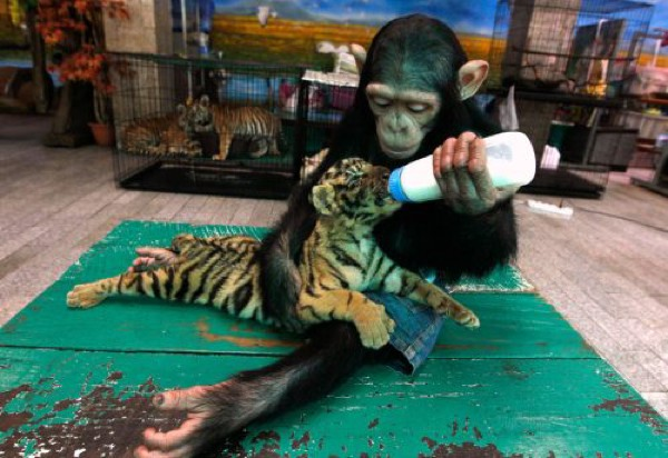 Kuriozi ar dzīvniekiem 84784526