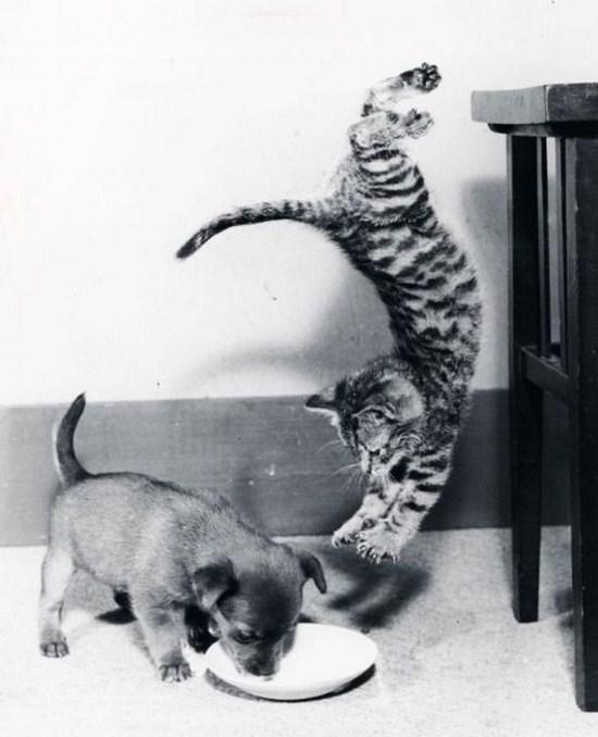 Lidojošie kaķi - Page 6 85095859