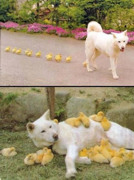 Kuriozi ar dzīvniekiem - Page 2 85152107