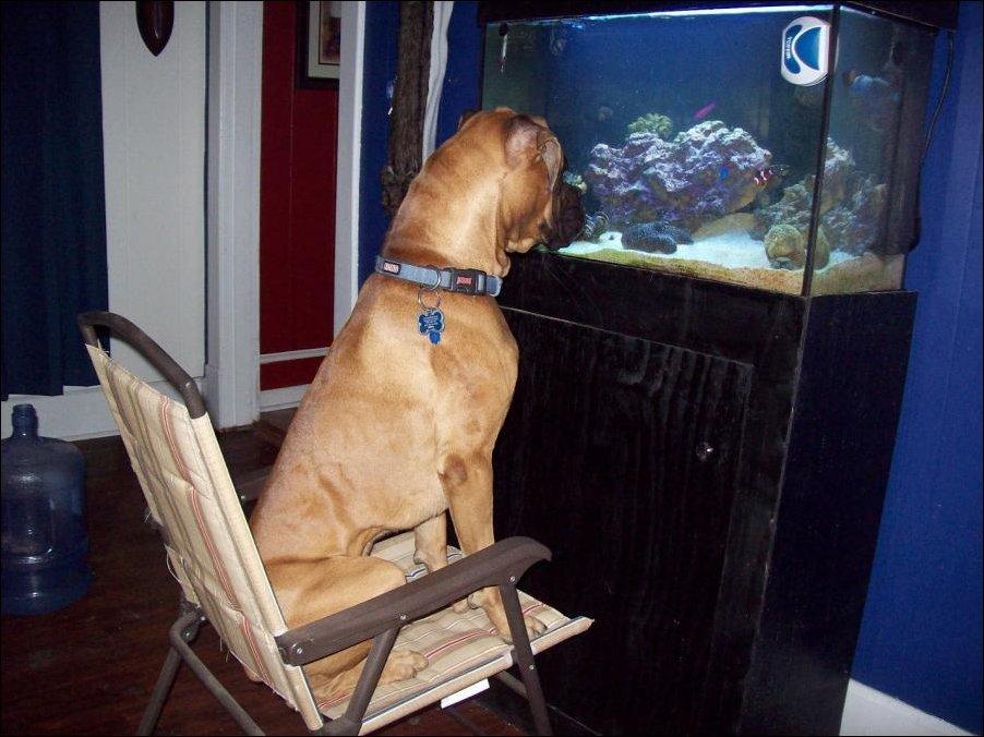 Lietderīga informācija par dzīvniekiem un putniem, online web kameras - Page 3 84272488