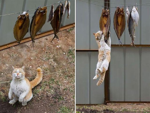 Lidojošie kaķi - Page 4 84315268
