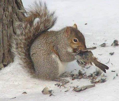 Lietderīga informācija par dzīvniekiem un putniem, online web kameras - Page 4 84304124