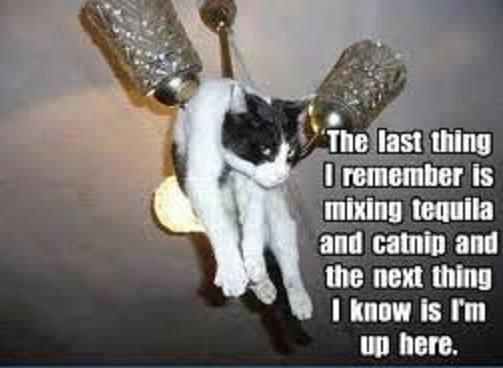 Lidojošie kaķi - Page 6 84725903