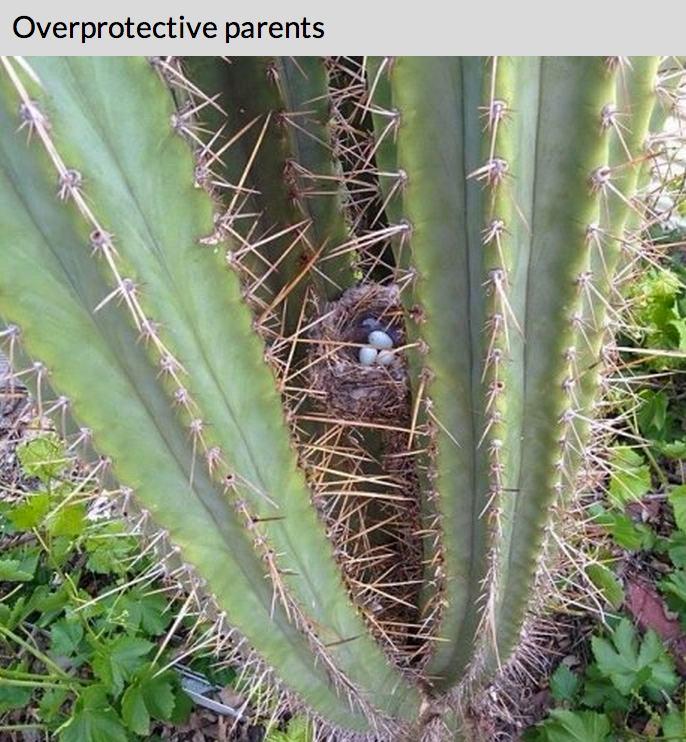 Lietderīga informācija par dzīvniekiem un putniem, online web kameras - Page 2 84185979