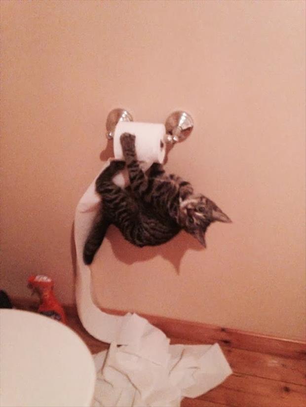 Lidojošie kaķi - Page 4 83796592